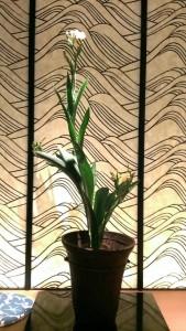 檜扇 祇園祭のお花